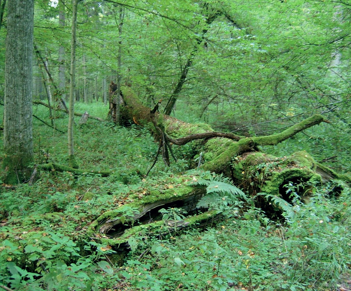 Im Bialowieski-Nationalpark © Ralf Lotys