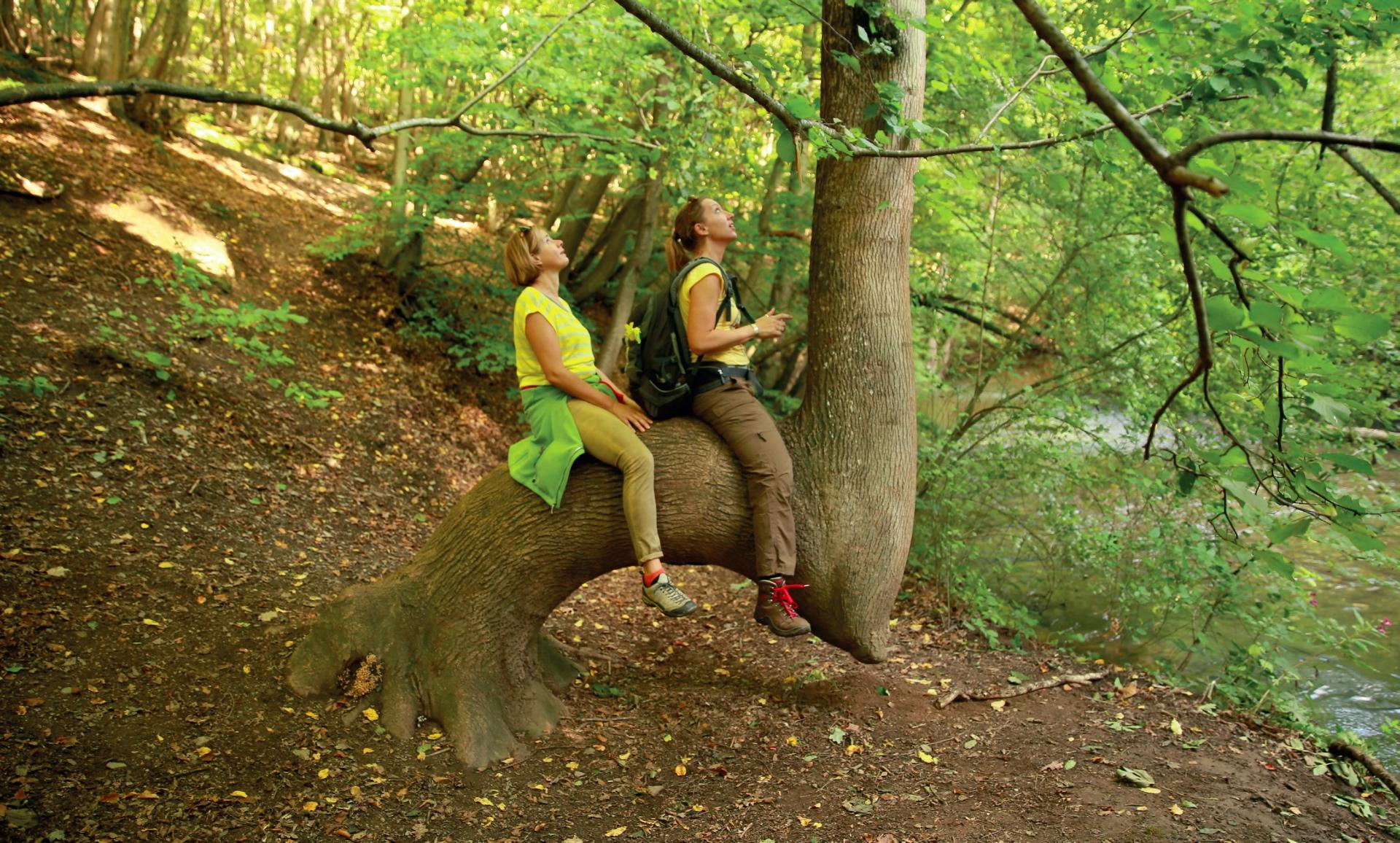 Der Pyrmonter Felsensteig in der Eifel ist für wanderlustige Frauen wie geschaffen © Michael Sänger