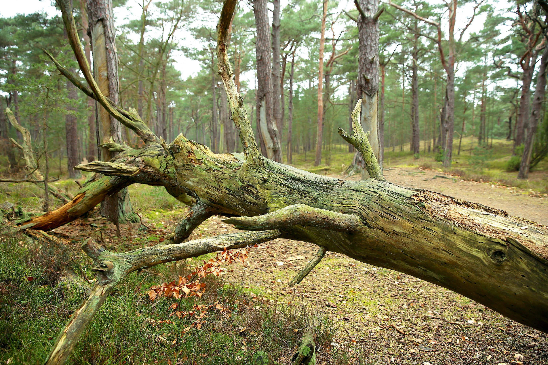 Abgestorbene Bäume, ohne Laub kein Leben © Michael Sänger