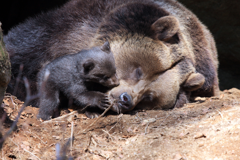 Bärenbabies © Drei im Woid