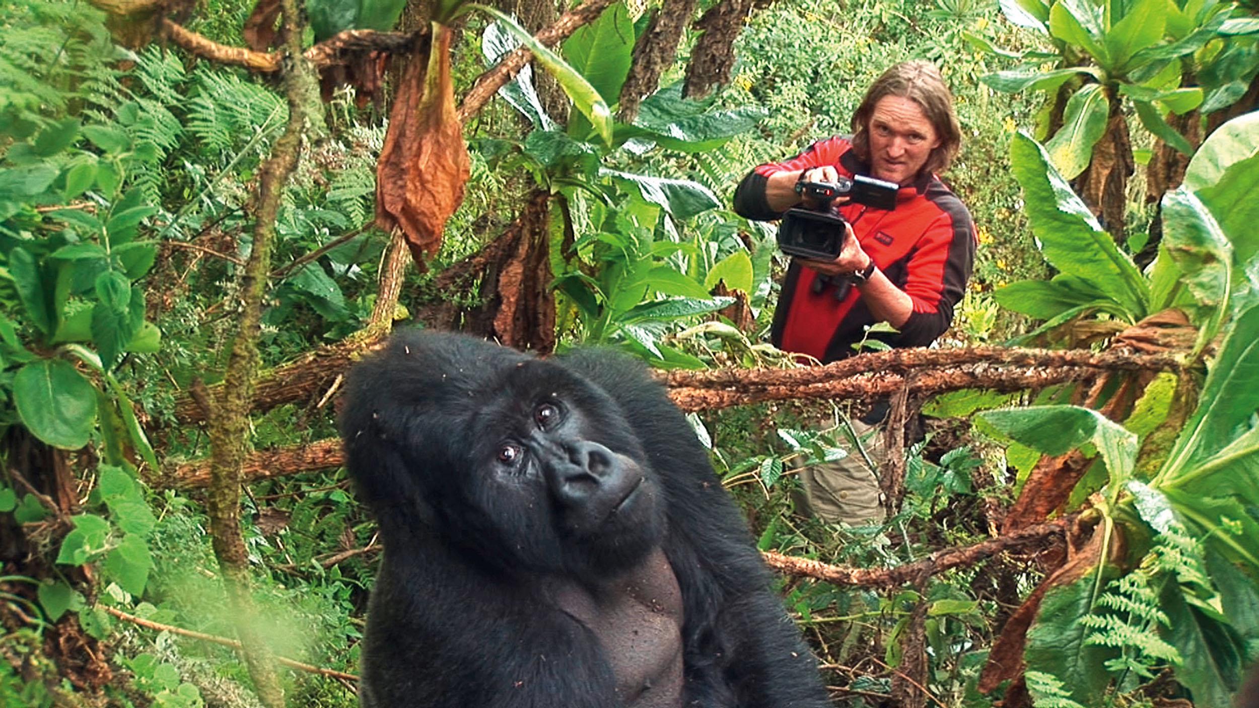 Andreas Kieling bei den Berggorillas in Zentralafrika © Piper-Verlag