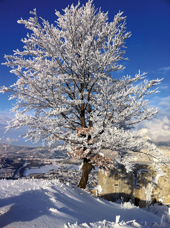 Prachtvoller Baum am Wegesrand © Lutz Bormann