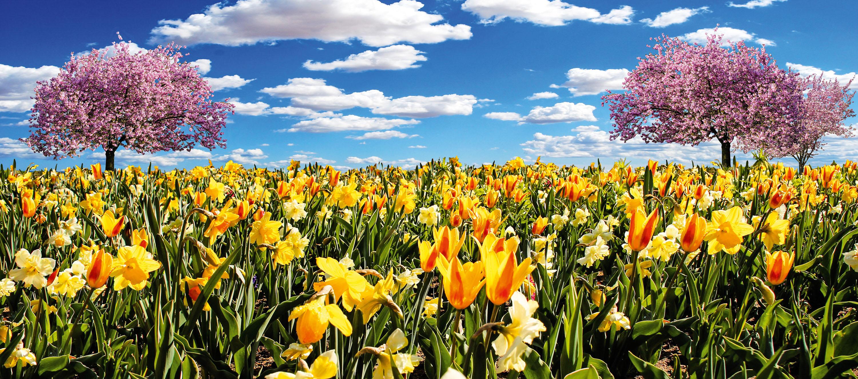 """""""Frühling lässt sein blaues Band wiederflattern durch die Lüfte..."""" Eduard Mörike anno 1828 © pxhere-Datenbank"""