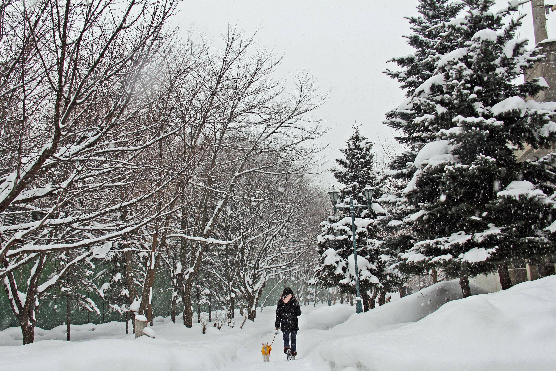 So schön kann winterliches Gassigehen sein © pxhere.com