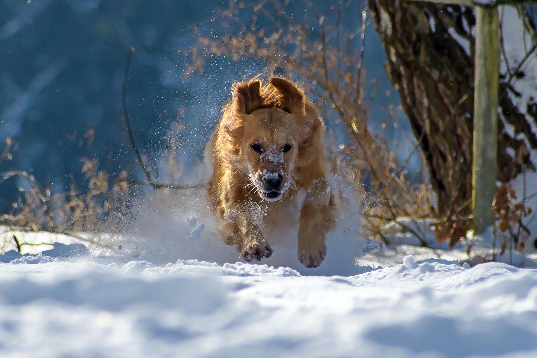Achtung – mit Rammgeschwindigkeit nähert sich der Liebling © pxhere.com