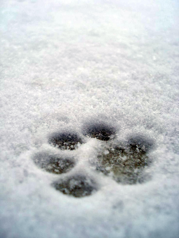 Das Hologramm einer Hundepfote © pxhere.com