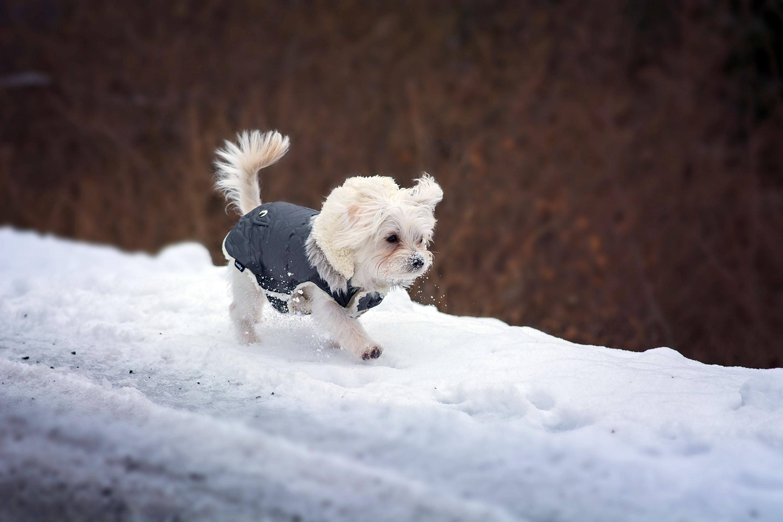 Kleine Grazien schützt man gut mit einem Hundemäntelchen © pxhere.com