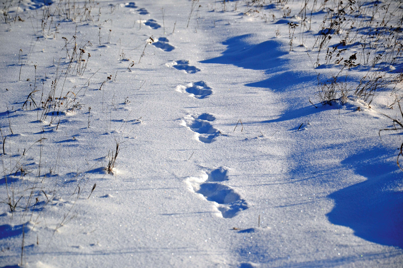 Spurensuche, wer war`s? © pxhere.com