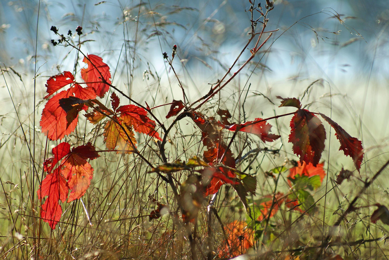 Winteridylle – rostrotes Blattwerk © pxhere.com