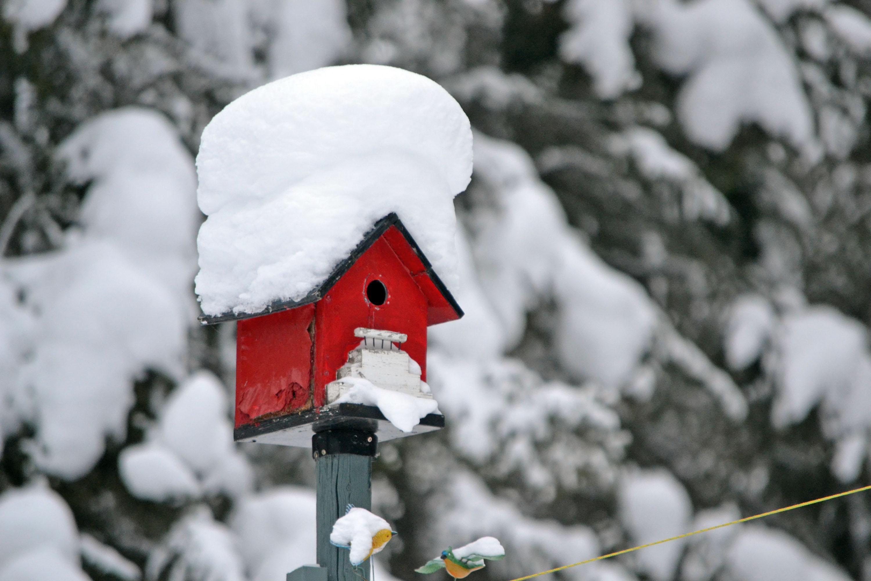 Eine Haube aus Schnee für das Vogelhäuschen © pxhere.com