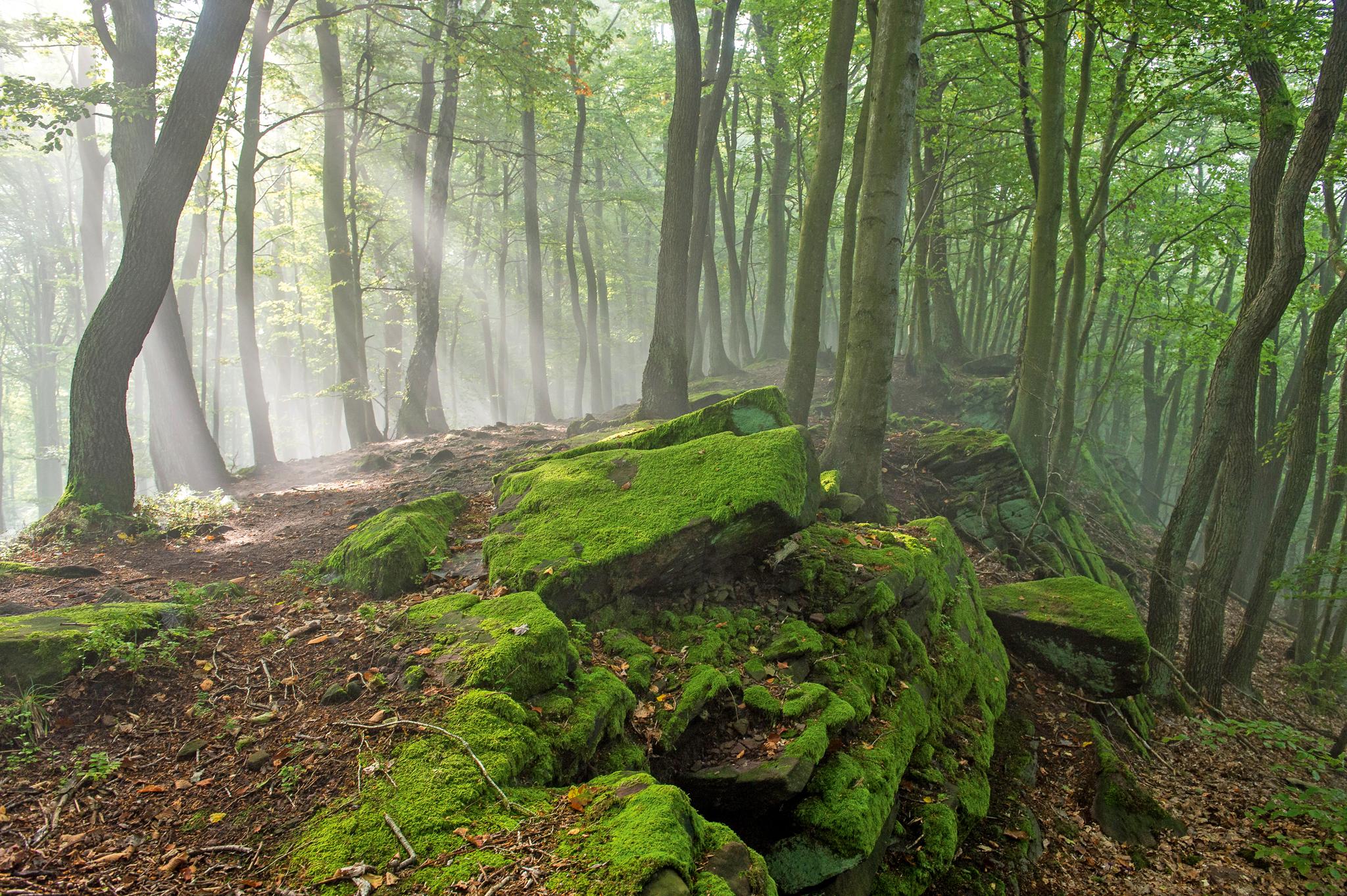 Morgenstimmung in einem Wald im thüringischen Eichsfeld. Dem Sichtbaren steht das Unsichtbare gleichgewichtig gegenüber. Das unterirdische Netzwerk der Wurzeln und Pilze und die gasförmigen Partikel und Botenstoffe in der Luft.