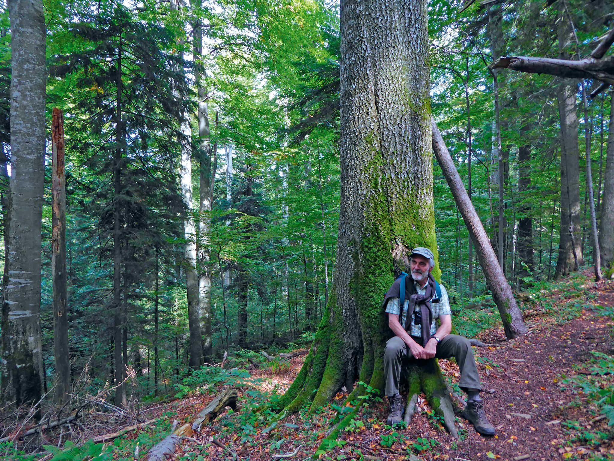 Lutz Fähser in Rumänien in einem Tannen-Buchen-Urwald der Karpaten. © Privatarchiv Dr. Lutz Fähser