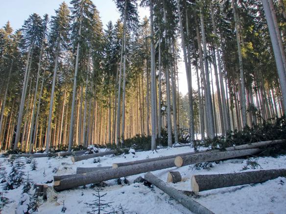 Im Frühjahr wächst das Frühholz für einen schnellen Transport von Wasser und Mineralien © pxhere.com