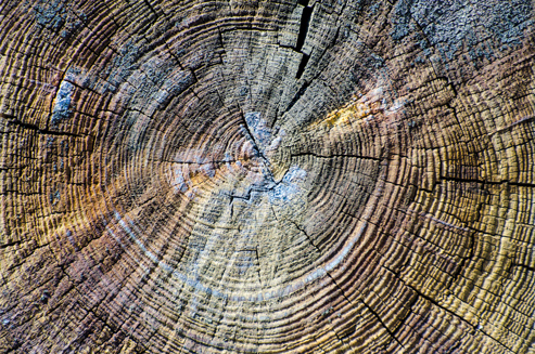 Der Querschnitt eines gefällten Baumes ist wie ein schriftlicher Lebenslauf © pxhere.com