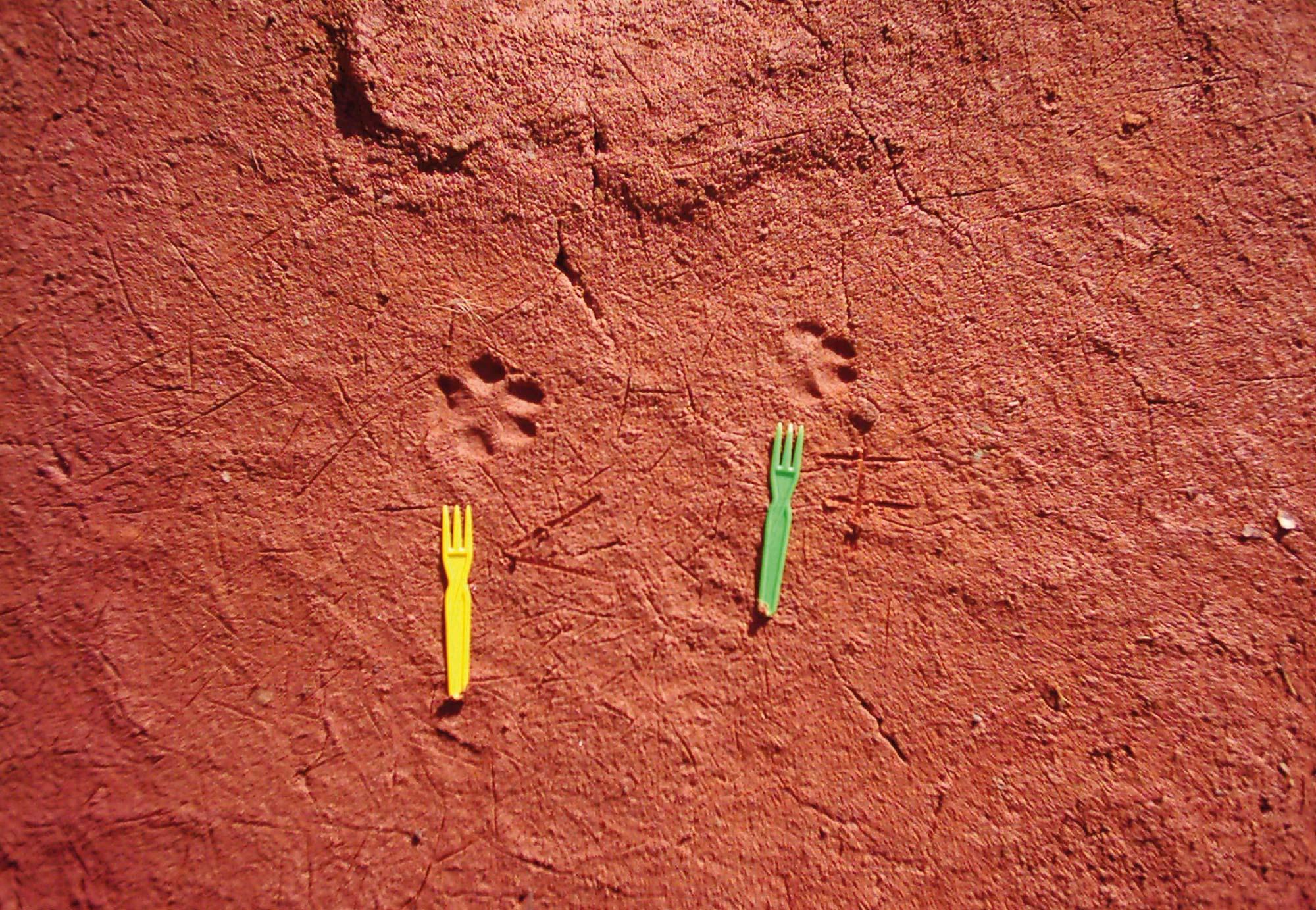 Frittengabeln können helfen, den Abstand von Trittsiegeln klar zu erkennen © Archiv Uwe Belz