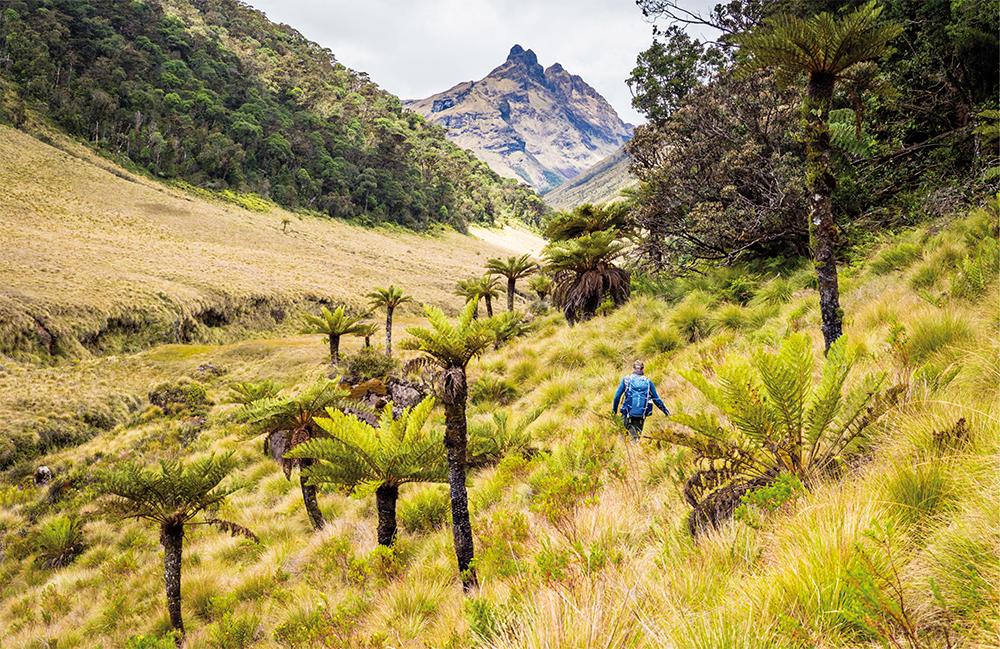 Mystisches Grasland im Hochland von Papua-Neuguinea © Adrian Rohnfelder. Alle Rechte vorbehalten.