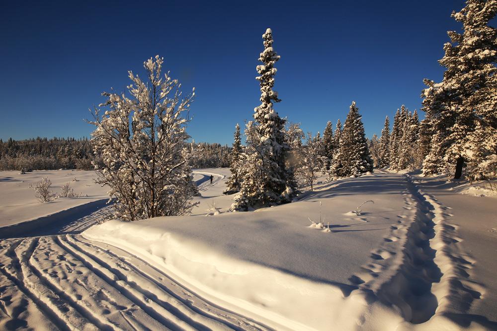 Links die Langlaufloipe, doppelspurig angelegt. Rechts die inzwischen wieder verschneite Spur eines Schneeschuhläufers.